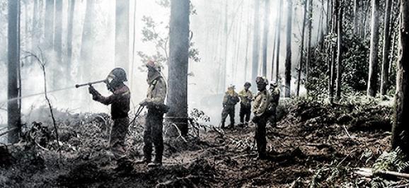 Mangueras forestales